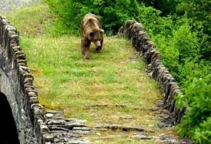 הדובים החומים של צפון יוון